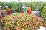 Đa dạng hóa cây trồng, vật nuôi nâng cao giá trị sản xuất