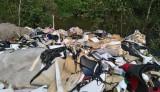 Lén lút đổ rác thải công nghiệp gần rừng tràm