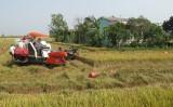 Bến Lức: Chuyển giao nhiều mô hình trong sản xuất nông nghiệp