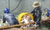 Vĩnh Hưng: Giám sát thực hiện chính sách khuyến khích phát triển nuôi thủy sản