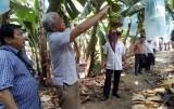 Đoàn cán bộ huyện Buôn Đôn (Đắk Lắk) học tập mô hình sản xuất nông nghiệp tại huyện Đức Huệ