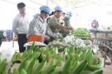 Phong trào nông dân thi đua sản xuất - kinh doanh giỏi mang lại hiệu quả thiết thực