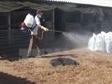 Tiêu hủy hơn 900 con gà bị nhiễm cúm H5N1 tại tỉnh Hậu Giang