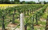 Nhơn Thạnh Trung thay đổi cơ cấu cây trồng