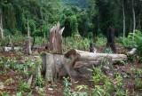 Bắt nguyên Giám đốc công ty lâm nghiệp phá hoại hơn 2.000ha rừng