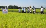 Ứng dụng phân hữu cơ vi sinh – Nông dân thu lợi nhuận trên 20 triệu đồng/ha