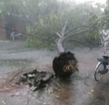 TP.Tân An: Mưa lớn làm cây đổ, đường ngập