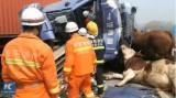 Đâm xe liên hoàn dài hơn 2km trên đường cao tốc, 7 người chết