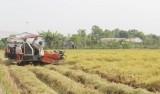 Tân Thạnh: Khởi sắc ở vùng lúa chất lượng cao