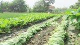 Long An: Tình hình tiêu thụ nông sản khởi sắc