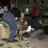 Cảnh sát bắn thủng lốp xe, bắt đối tượng vận chuyển động vật hoang dã