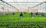 Thế nào được gọi là sản xuất nông nghiệp sạch?