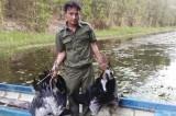 Động vật rừng hoang dã trước nguy cơ bị tận diệt