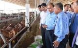 Thủ tướng: Không đưa thêm nhiệt điện than vào Bình Thuận