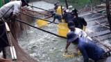Nuôi cá tra công nghiệp thu lãi tiền tỉ ở Tiền Giang
