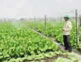 Tổ hợp tác rau mang lại nhiều hiệu quả cho nông dân