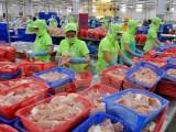 """Giá cá tra giống tại Đồng bằng sông Cửu Long """"hạ nhiệt"""""""