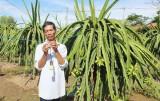Hỗ trợ nông dân trồng thanh long sử dụng điện tiết kiệm