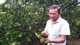 Bến Lức: 184 hộ nông dân đạt danh hiệu sản xuất, kinh doanh giỏi cấp tỉnh