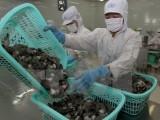 Phản hồi về lệnh tạm ngừng nhập khẩu tôm và thịt tôm chưa nấu chín