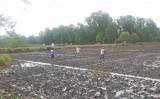 Nông dân Bến Lức xuống giống được 3.900ha lúa Hè Thu