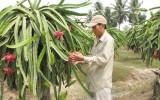 Khó khăn trong chuyển đổi cơ cấu cây trồng