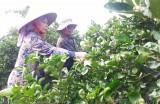 Bến Lức: Thiếu lao động nông thôn