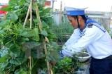 Sức sống mãnh liệt ở Trường Sa: Màu xanh của lá trên quần đảo đá