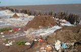 Báo động xói lở bờ biển, suy thoái rừng ngập mặn ở ĐBSCL