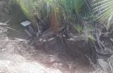 Sông Vàm Rạch Dừa có dấu hiệu tiếp tục sạt lở