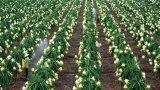 Tìm đầu ra cho nông sản - Bài 2: Nông nghiệp ứng dụng công nghệ cao - Giải pháp đột phá