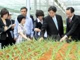 Cho vay đầu tư nông nghiệp công nghệ cao: Vẫn nỗi lo rủi ro