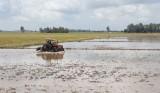Sản xuất liên vụ, nhiều nông dân thua lỗ