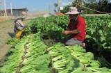 Bài 1: Thực trạng liên kết tiêu thụ nông sản ở Long An
