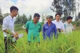 """""""Tạo giống lúa chống chịu phèn, ngắn ngày, năng suất cao, chất lượng tốt cho vùng đất phèn tỉnh Long An"""""""