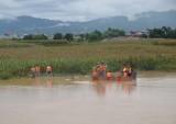 Mưa lũ Điện Biên: 2 người chết và mất tích, thiệt hại hơn 3,5 tỷ đồng
