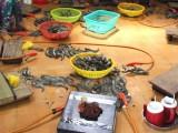 Bạc Liêu: Bắt quả tang 2 cơ sở bơm tạp chất vào tôm nguyên liệu