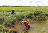 Vĩnh Hưng: Tập trung bảo vệ lúa Hè Thu năm 2017