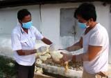 Phạt đến 100 triệu đồng với vi phạm hành chính trong lĩnh vực thú y