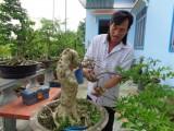 Phát triển kinh tế từ bonsai