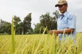 Bình Hòa Tây: Đẩy mạnh phát triển kinh tế, nâng cao đời sống người dân