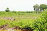 Bến Tre: 5 cựu cán bộ lãnh án vì phá rừng
