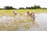 Tân Hưng: Mưa, lũ làm thiệt hại gần 22 tỉ đồng