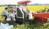 Doanh nghiệp đầu tư vào công nghệ và thiết bị chế biến lúa gạo được hỗ trợ vay vốn VnSAT