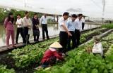 Phát triển nông nghiệp ứng dụng công nghệ cao: Khó khăn nhất là đầu ra của nông sản