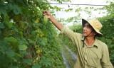 Tân Mỹ: Hướng đến nông nghiệp ứng dụng công nghệ cao