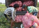 Tạo cơ chế hấp dẫn thu hút doanh nghiệp đầu tư vào nông nghiệp