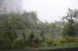 Trong 6 giờ tới, bão số 10 đi sâu vào các tỉnh Hà Tĩnh đến Quảng Trị