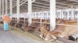 Hỗ trợ 25.000 liều vắc-xin lở mồm long móng cho đàn gia súc
