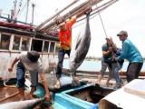 Kim ngạch xuất khẩu nông lâm thủy sản 9 tháng đạt gần 27 tỉ USD